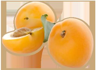 杏 ココロ化粧品